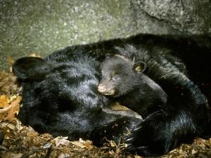 hibernate1