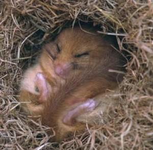 hibernate4